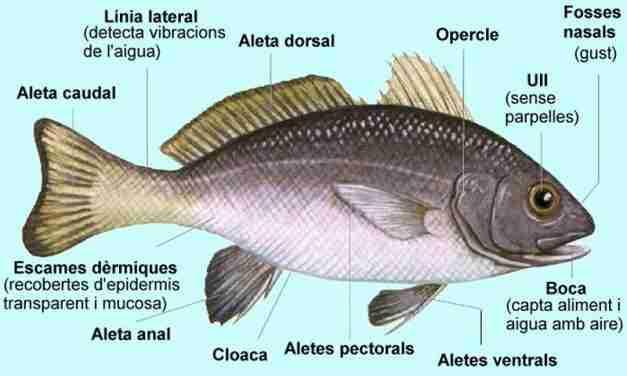 Els noms dels peixos en català