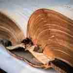 El Museo del Libro Fadrique de Basilea y Altafulla. La Librería Rara (I)